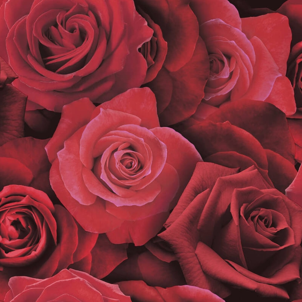 Austin Rose Wallpaper Red Wallpaper From I Love Wallpaper Uk