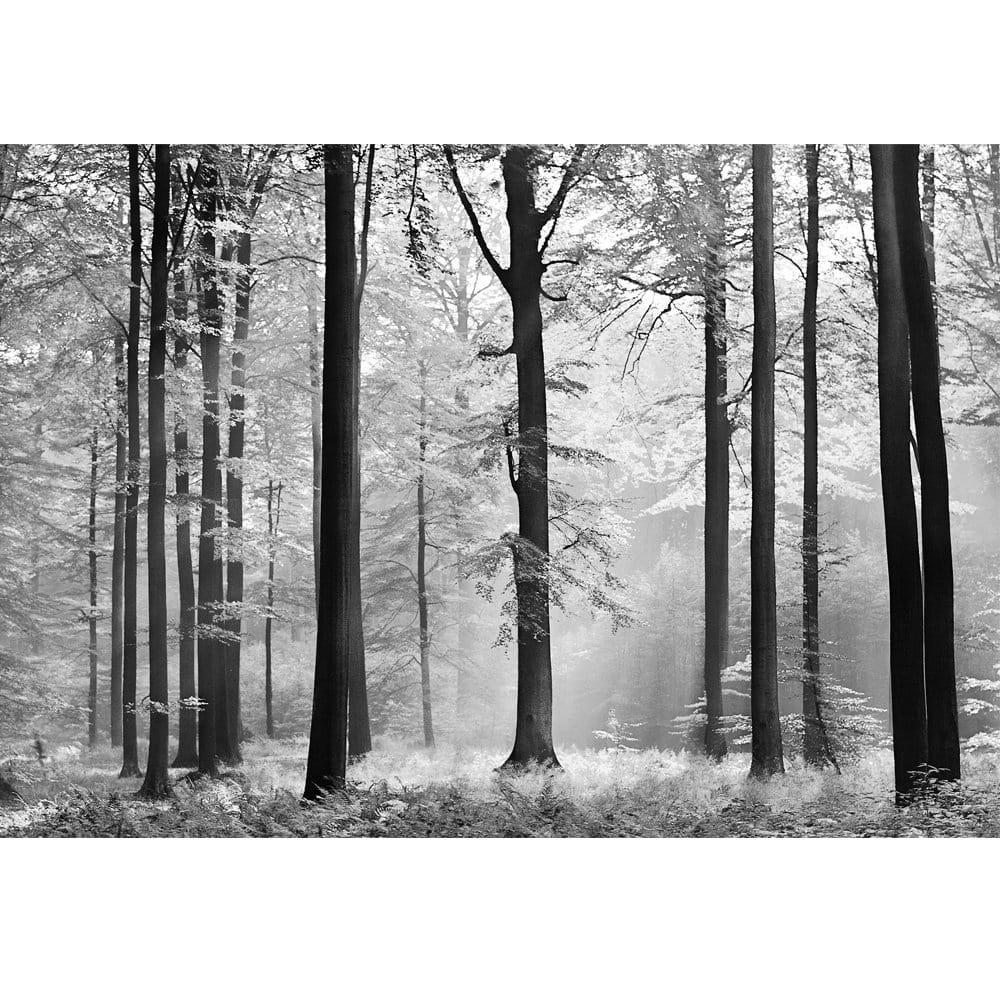100 argos wall murals multi ceramic tile tile the home argos wall murals forest mural uk the white forest mural wallpaper with forest