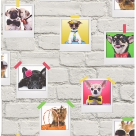 Bow Wow Dogs Wallpaper White Multicoloured