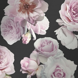 Floral Bloom Rose Wallpaper Charcoal, Pink