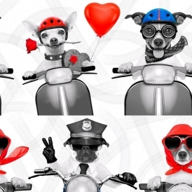 Biker Dogs Wallpaper Red, White, Blue (102561)