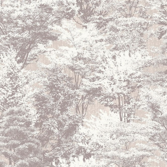 Crown Sycamore Forest Tree Wallpaper Natural