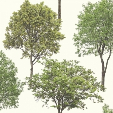 Woodland Trees Wallpaper Natural Green / Cream (FD40665)